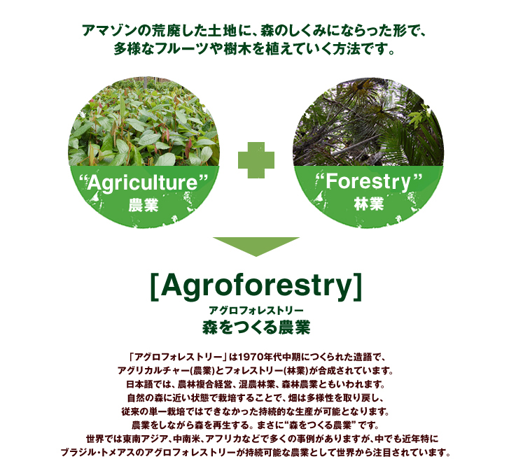 img_agroforestry_01_1
