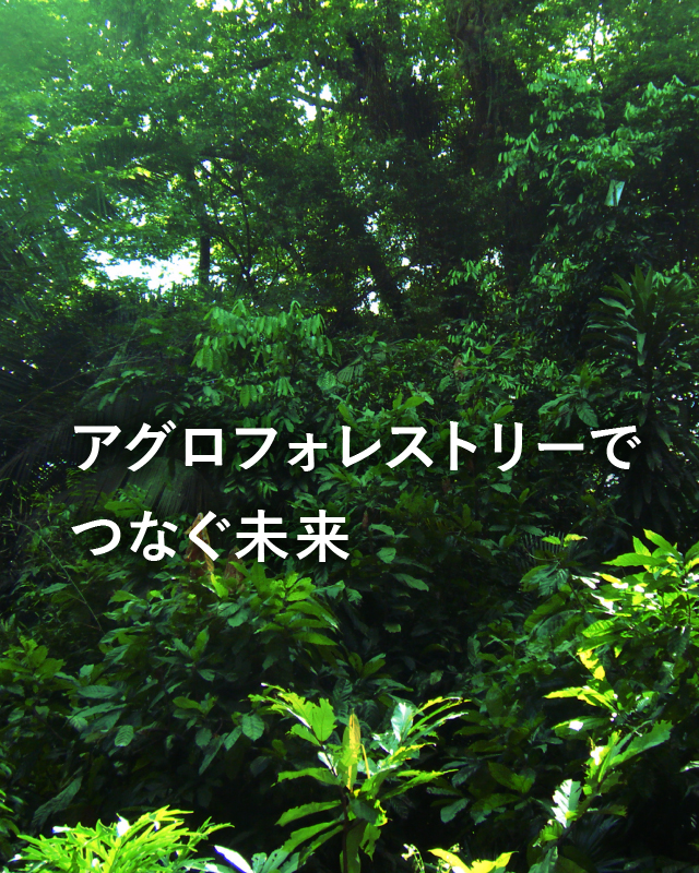 AGRICULTURE FORESTRY アサイーとアマゾンフルーツのリーディングカンパニーとして